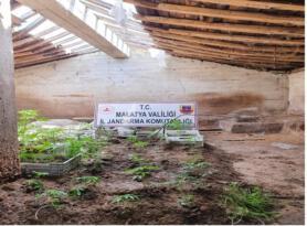 Malatya'da yasa dışı kenevir ele geçirildi