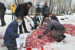Yüksekova'da koronaya karşı 70 kurban kesilip dua edildi