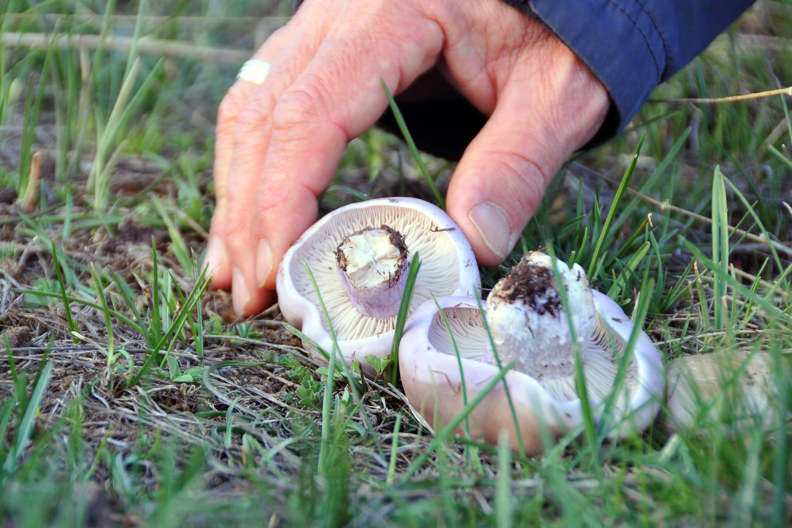 Erzincan'da mantar sezonu başladı