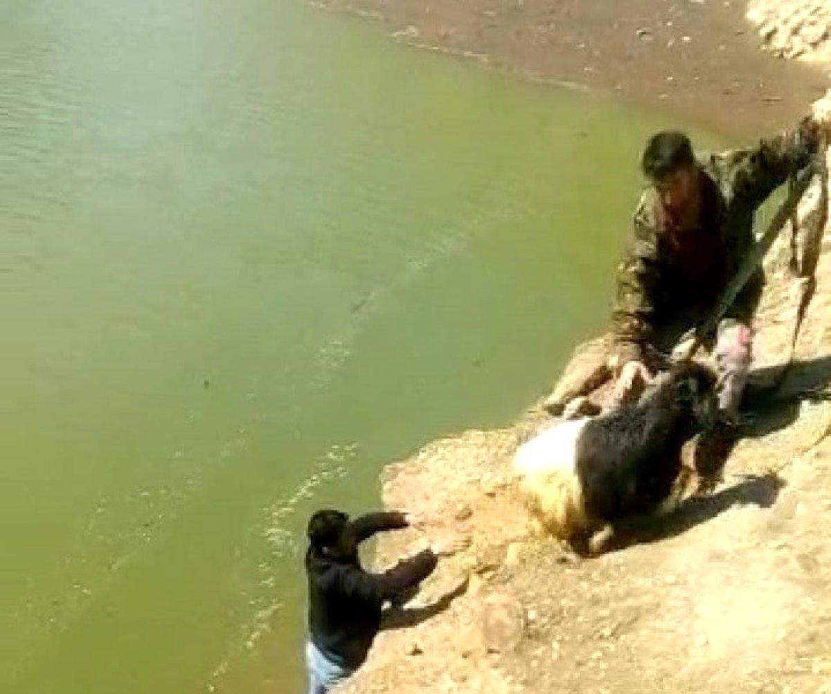 2 gün önce kaybolan keçi barajda bulundu, halatla kurtarıldı