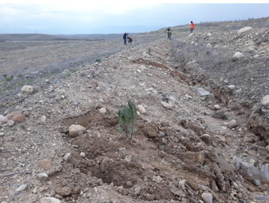 Iğdır'da ilk kez Lavanta bitkisi dikildi