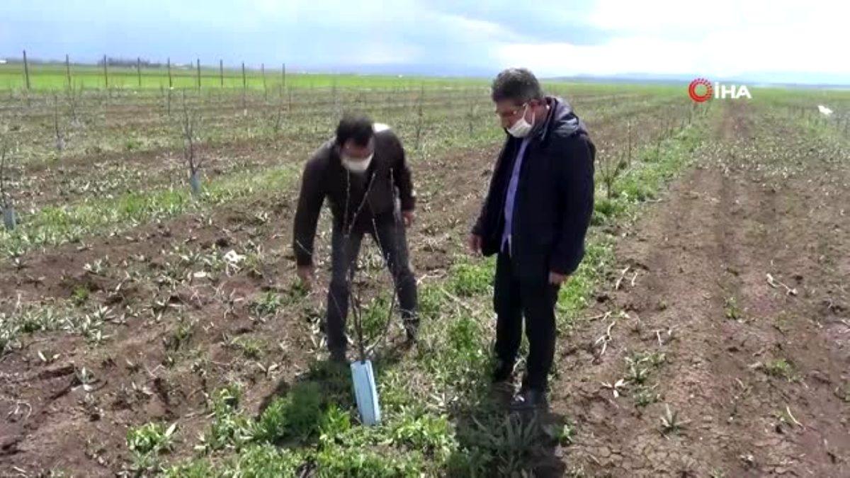 Ağrılı çiftçiler üretime devam ediyor