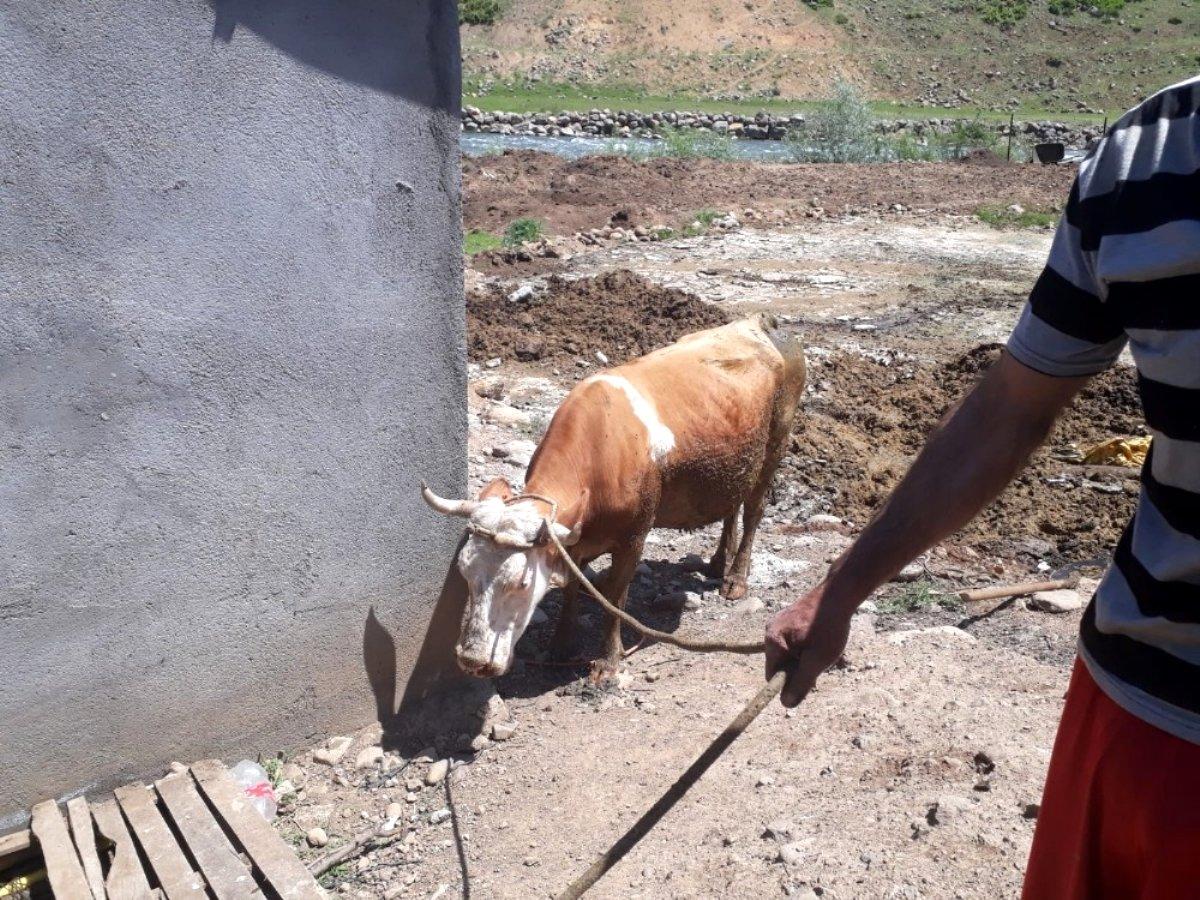 Bingöl de çamura saplanan inek kurtarıldı