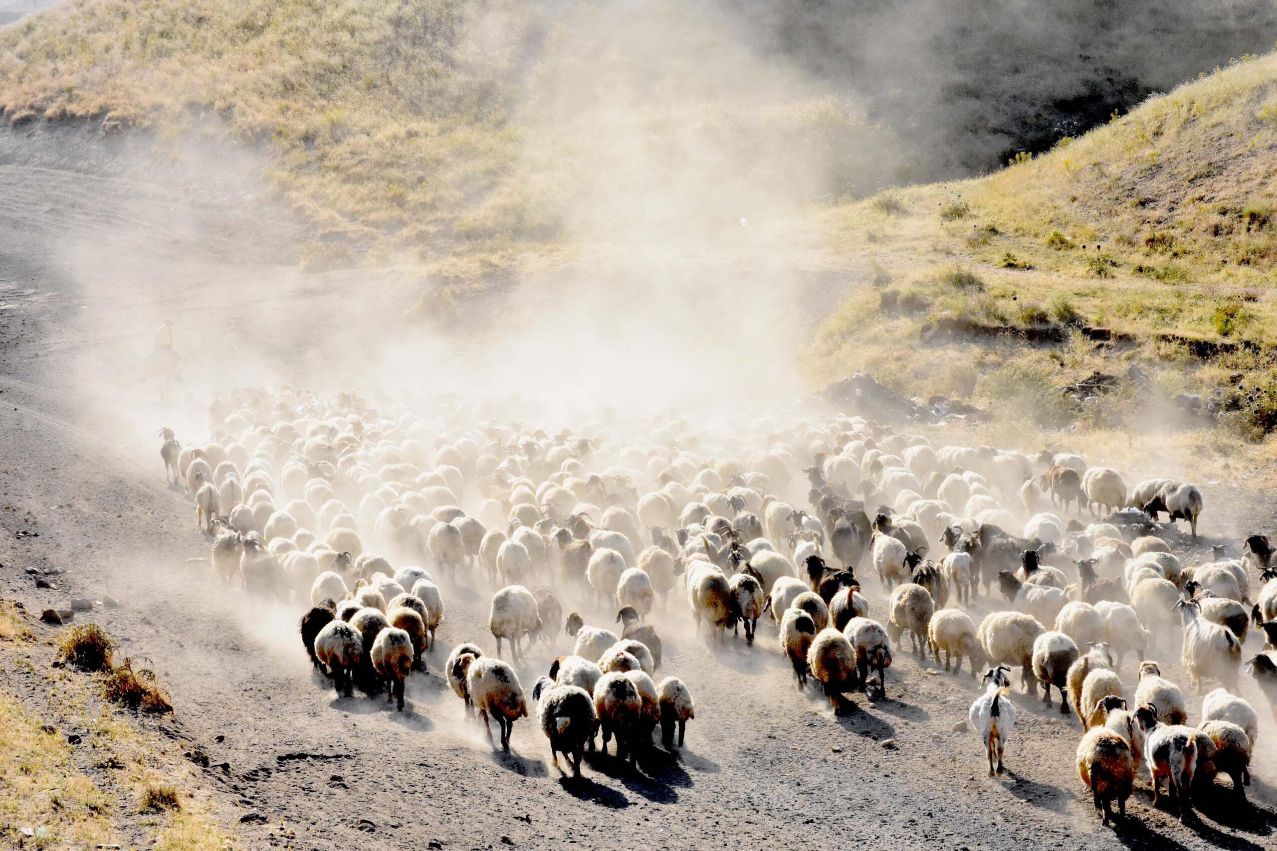 Bitlis'te 15 kilometrelik tozlu yolculuk süt sağımıyla son buluyor