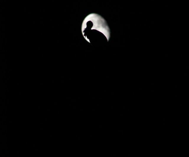 Iğdır'da son dördün Ay, leylek yuvası ve Ulu Camii üzerinde güzel görüntüler oluşturdu