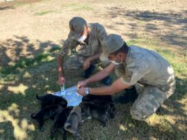 Anneleri ölen yavru köpeklere asker sahip çıktı