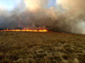 Bingöl'de ormanlık alanda çıkan yangın söndürüldü