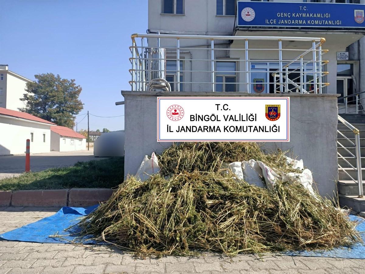 Bingöl'de 40 kilo esrar ile 2 bin 150 kök kenevir ele geçirildi