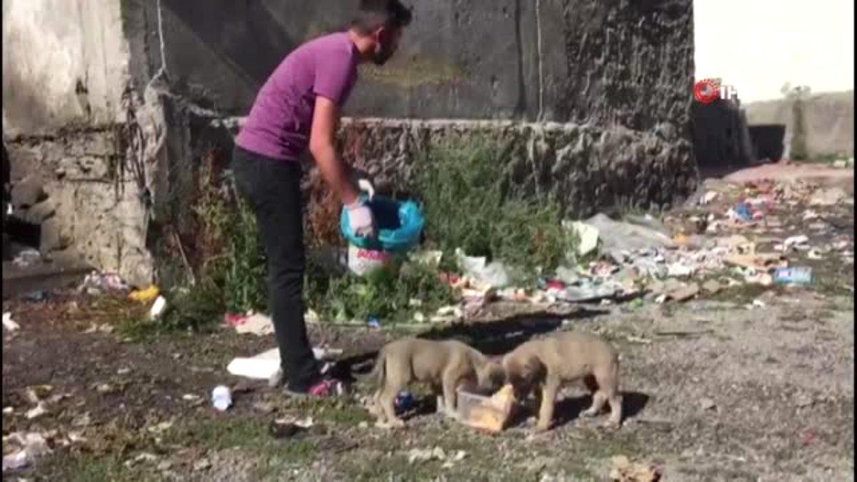 Bingöllü aşçıdan, çöp kenarlarında bulduğu yavru kedi ve köpeklere vefa