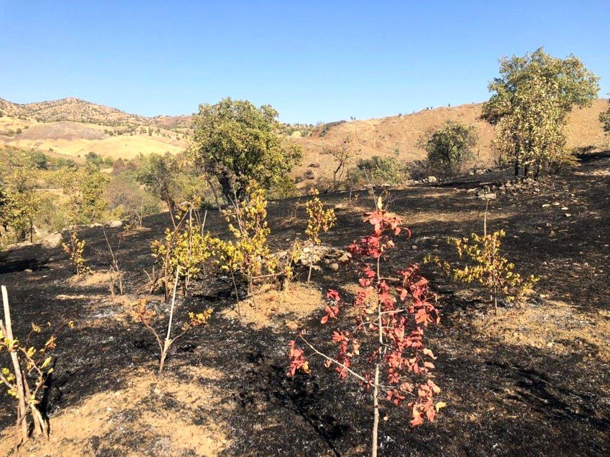 Son dakika haberi: Bingöl de çıkan yangında üzüm bağları zarar gördü