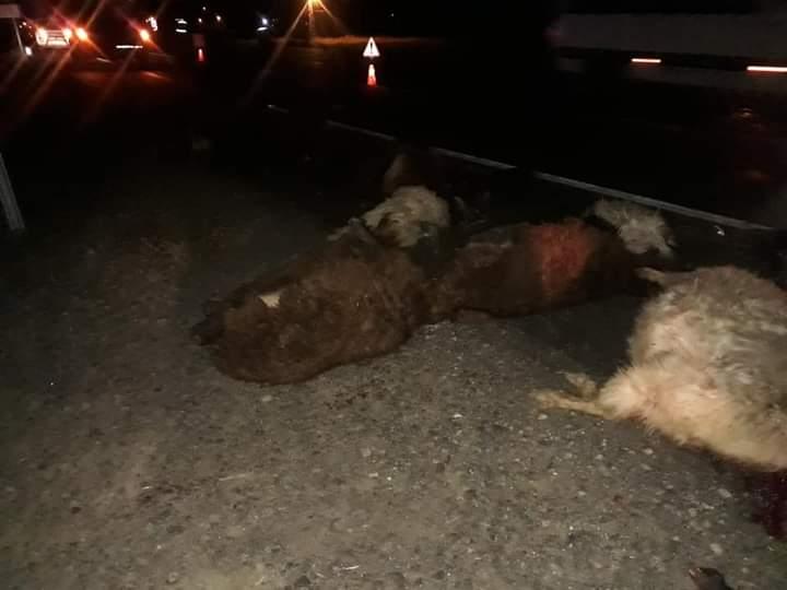 Minibüs küçükbaş hayvan sürüsüne çarptı,18 koyun telef oldu