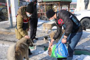 Jandarma soğuklardan etkilenen sokak hayvanlarını unutmadı