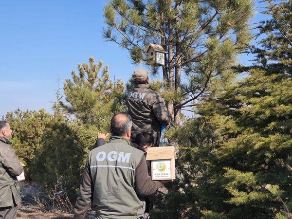 15 Temmuz Şehitler Ormanına kuşlar için yuva bırakıldı