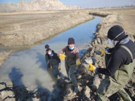 Islah edilen deredeki onlarca su kaplumbağası sulak alana taşındı
