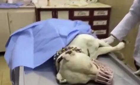 Yurda girişi yasak köpeği bıçaklayıp sahibini dövdüler.