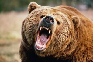 Kars'ta tarla ekimi yapan bir kişiye ayı saldırdı
