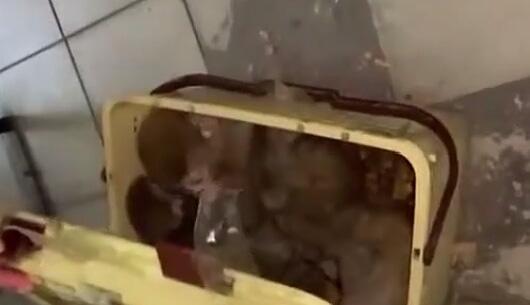 Gürbulak Gümrük Kapısı'nda kaçak maymun operasyonu