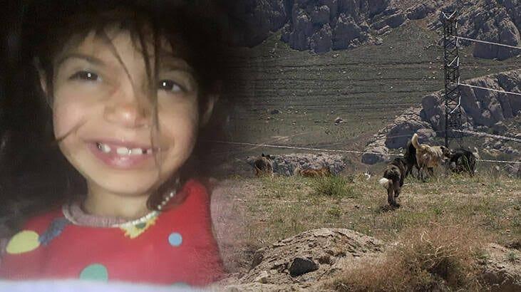 Van'da Korkunç Olay! Kız çocuğu köpekler tarafından parçalandı