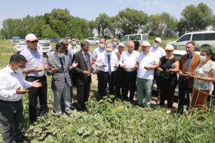 Yaz aylarının vazgeçilmezi Karpuz, Iğdır'da hasat edilmeye başlandı
